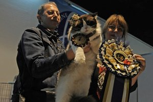 В Киеве выбрали самого красивого кота