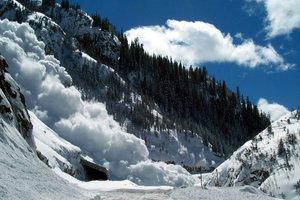 На Прикарпатье снежная лавина сломала более десятка огромных елей