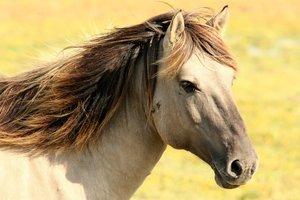 На одесском ипподроме похитили лошадь