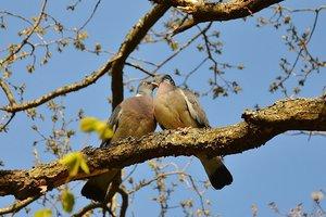 В Одессе массово гибнут голуби