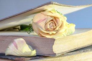 Названа возможная причина смерти известной английской писательницы Джейн Остин