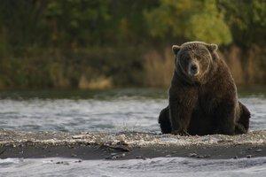 Карпатские леса стали опасны для туристов: там проснулись голодные медведи