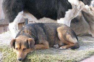 Бездомным животным нужна помощь: более 400 собак остаются без еды