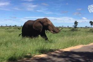 Слон погнался за машиной и напугал туристов