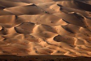 Ученые назвали новую причину превращения Сахары в пустыню