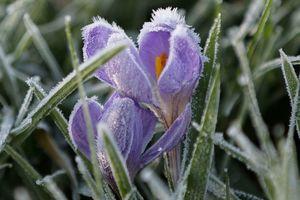 Погода на завтра: в Украине дождь с мокрым снегом