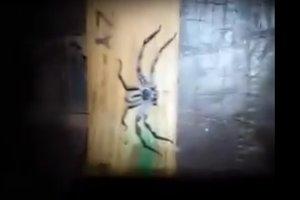 Огромная паучиха с выводком паучат привела в ужас интернет