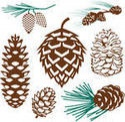 pinecone-collection_small