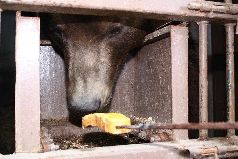 Взоопарке под Киевом посетители чуть неубили медведя— Сутки невставал