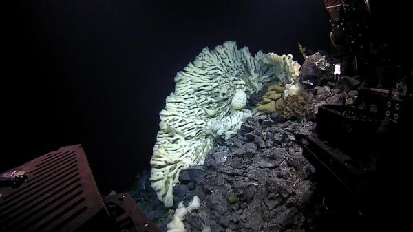 6ec6577-photo---biggest-sponge-in-papahanaumokuakea-far-away