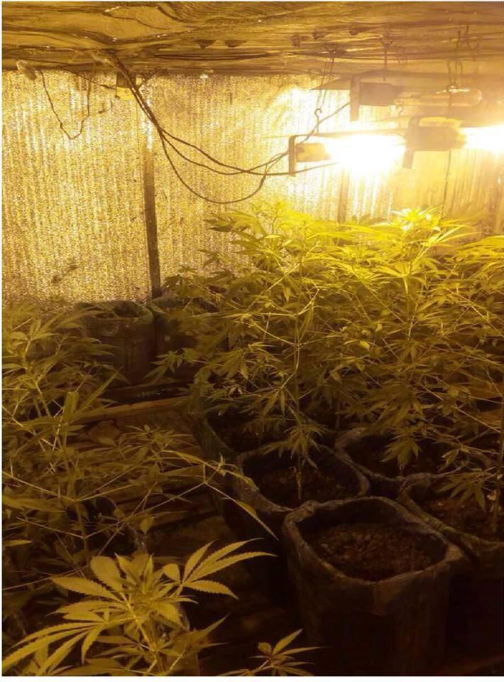 Теплицы для выращивания марихуаны стихи о марихуаны