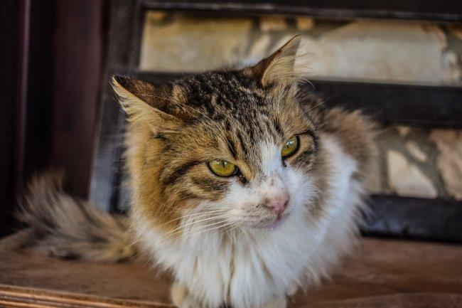 cat-2072513_1280