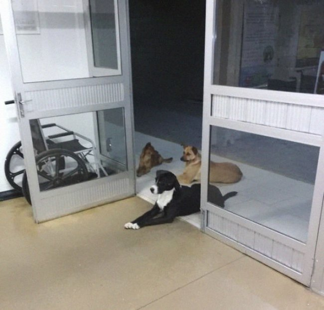 39c239d-homeless-man-hospital-waiting-dogs-chris-mamprim-4-5c1213b75c3b7--700