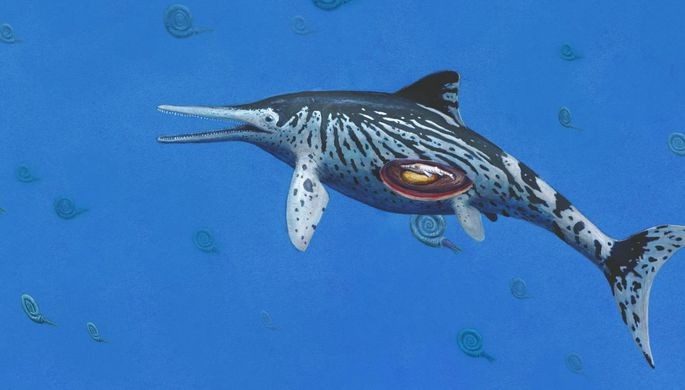 Эмбрион детеныша обнаружили востанках ихтиозавра