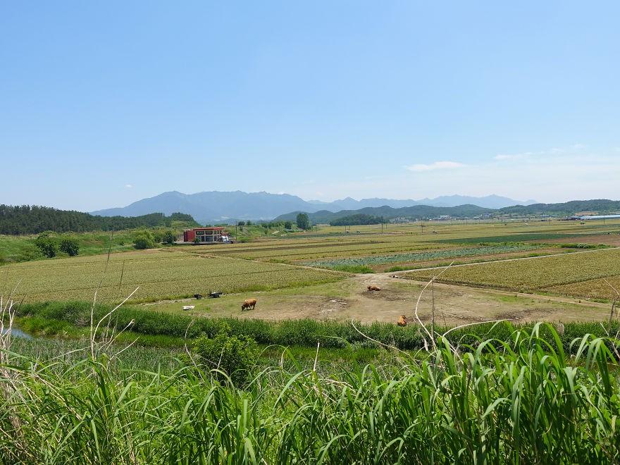 south-korea6