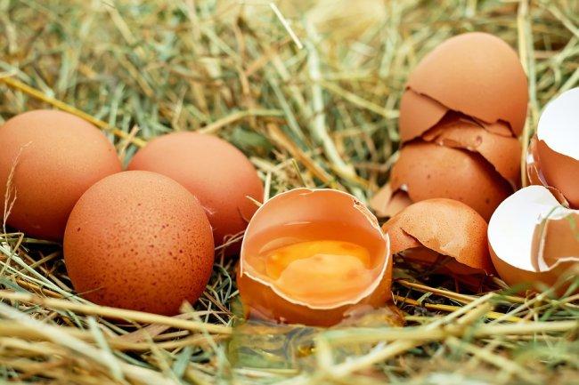 egg-1510449_960_720