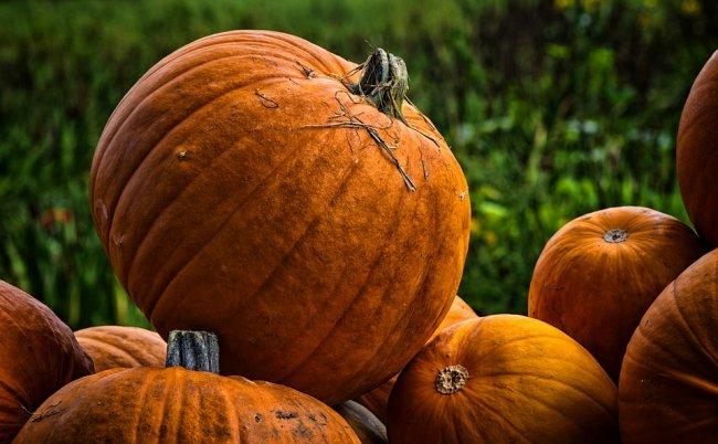pumpkins-3714867_960_720