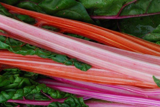 rhubarb-2357834_960_720