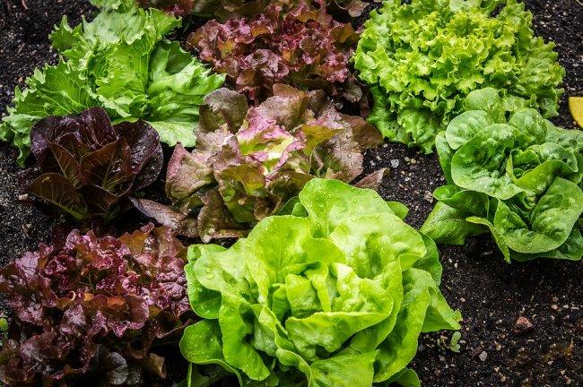 salad-2376777_960_720