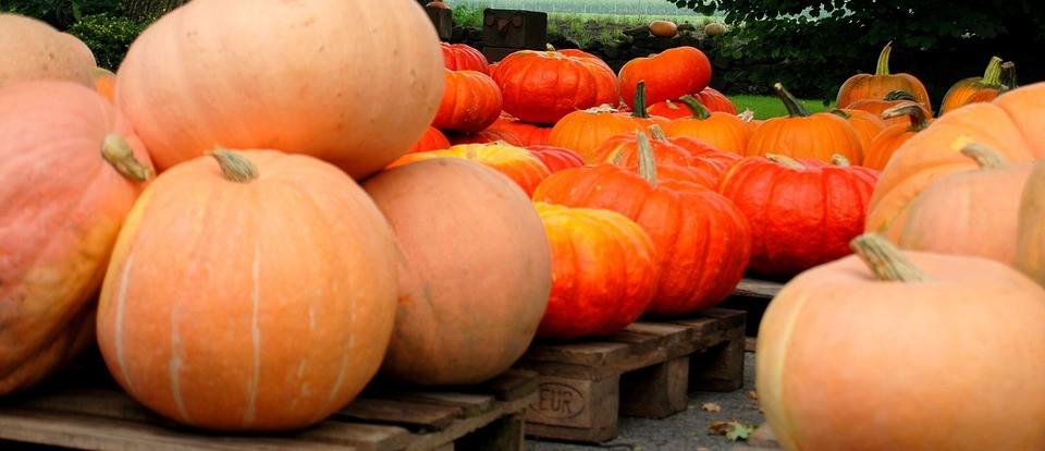 pumpkin-2725299_960_720
