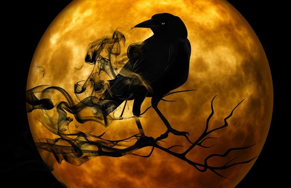 raven-988218_960_720