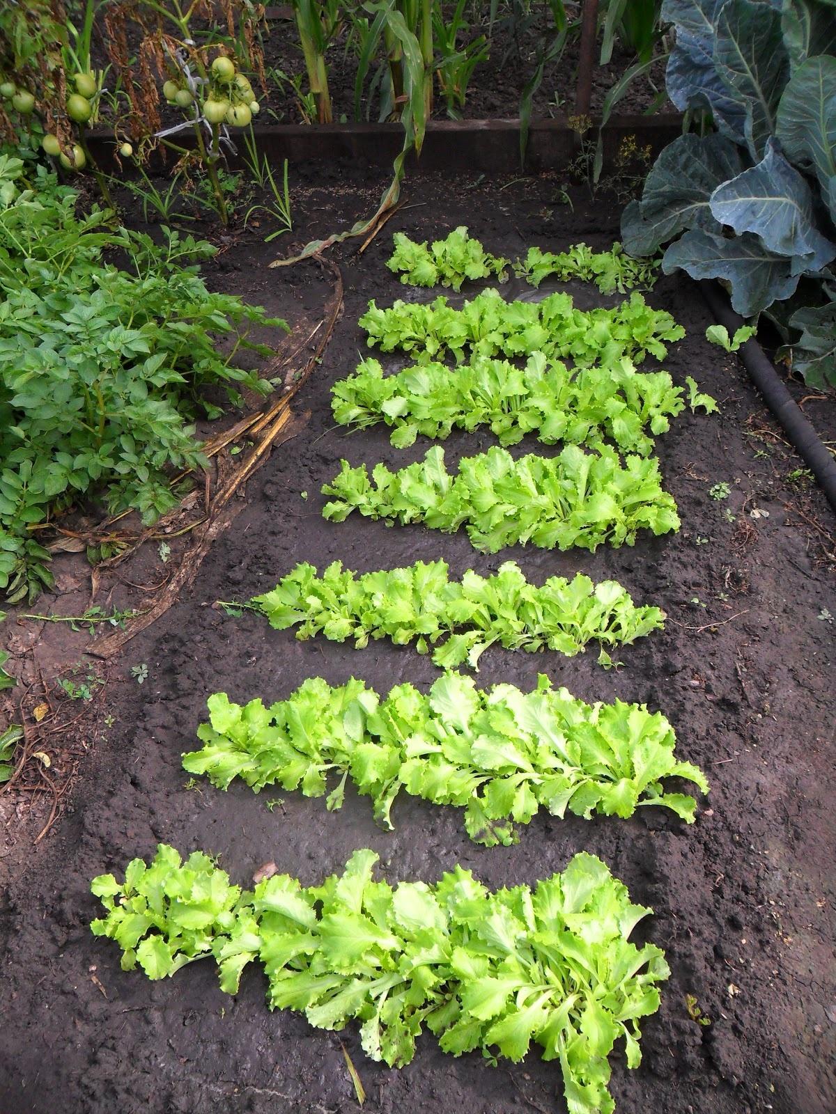 Советы садоводам: что посадить в июле-августе, чтобы использовать участок по максимуму
