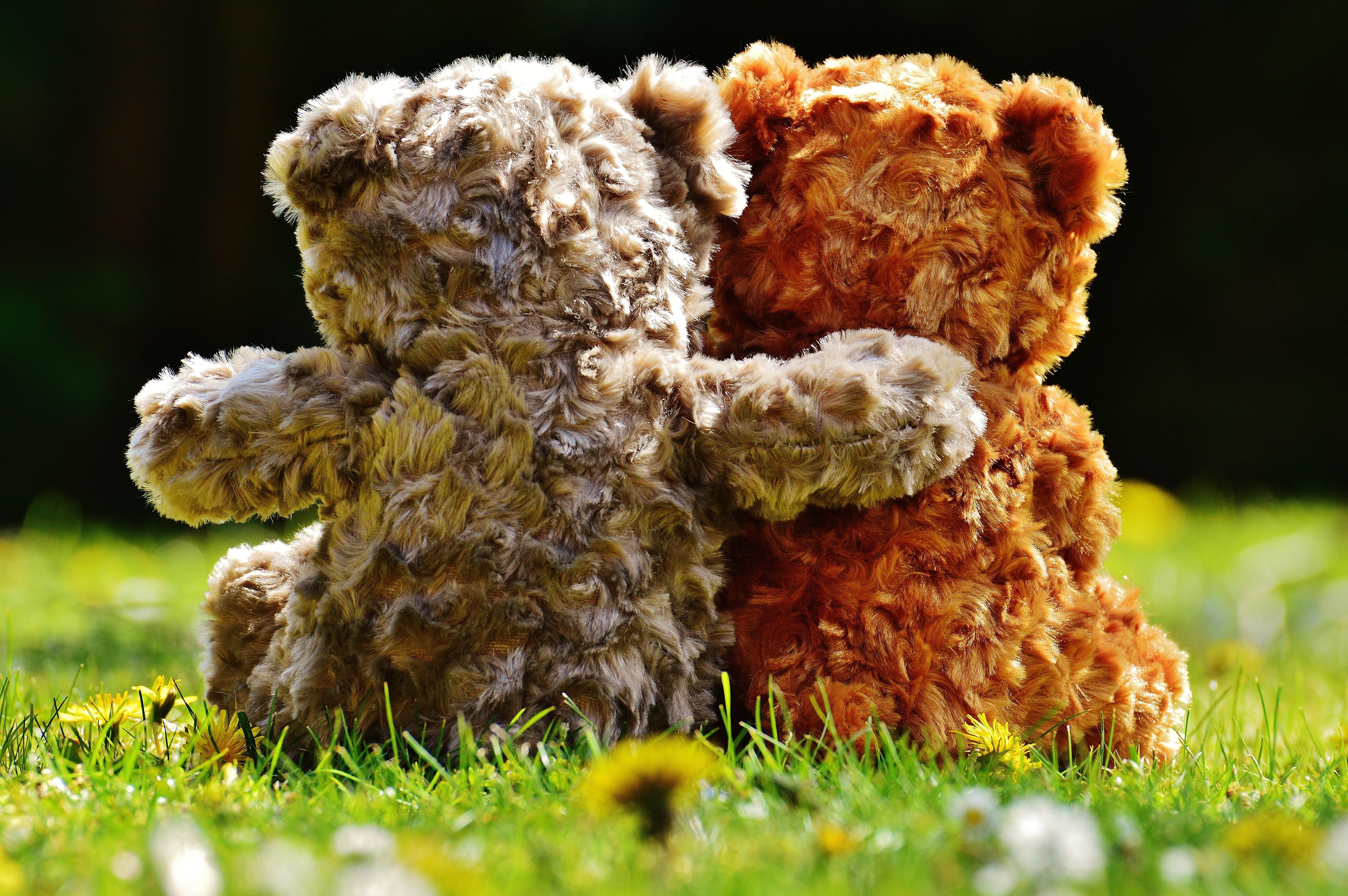 teddy-1361397