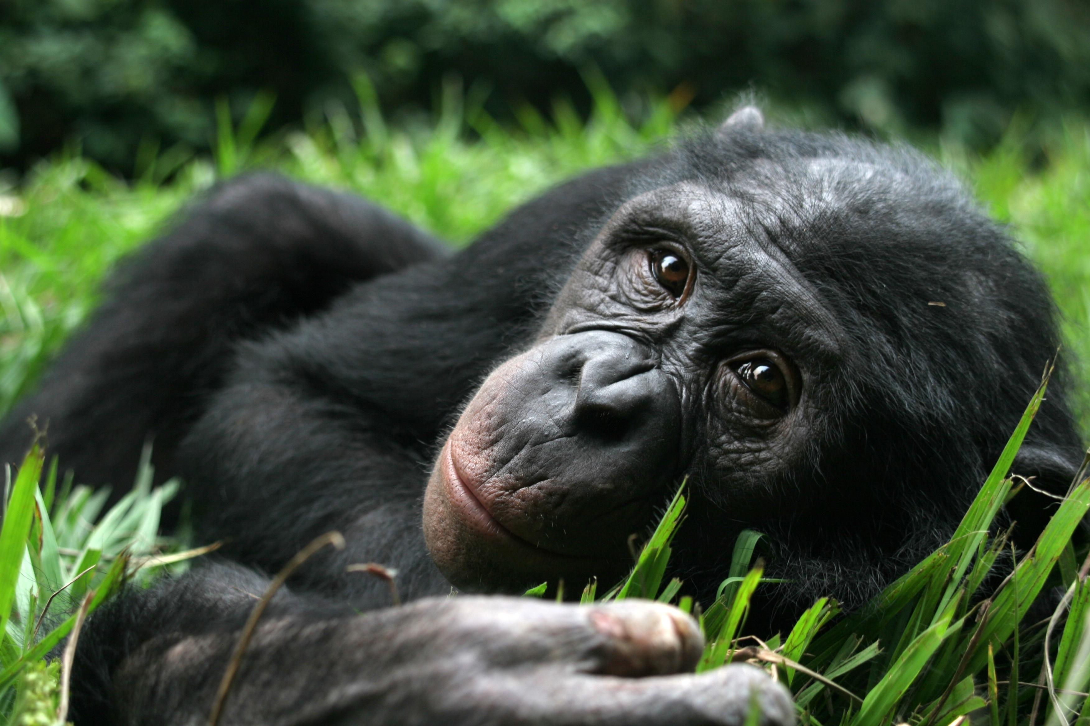 Секс фото человека с обезьяной 12 фотография
