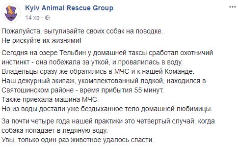 В Киеве домашняя собака устроила охоту на уток и погибла, фото-1