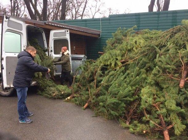 Как в Киеве избавляются от елок, фото-1