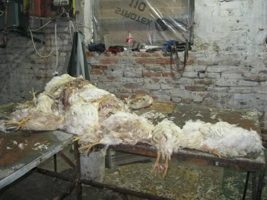 Под Киевом изъяли 8 тонн дохлой курятины