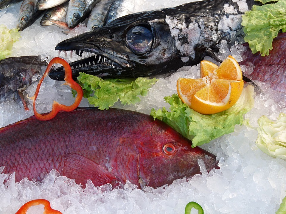 fish-213223_960_720