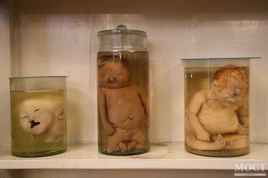 ТОП-5 самых необычных выставок в Днепропетровске, фото-5