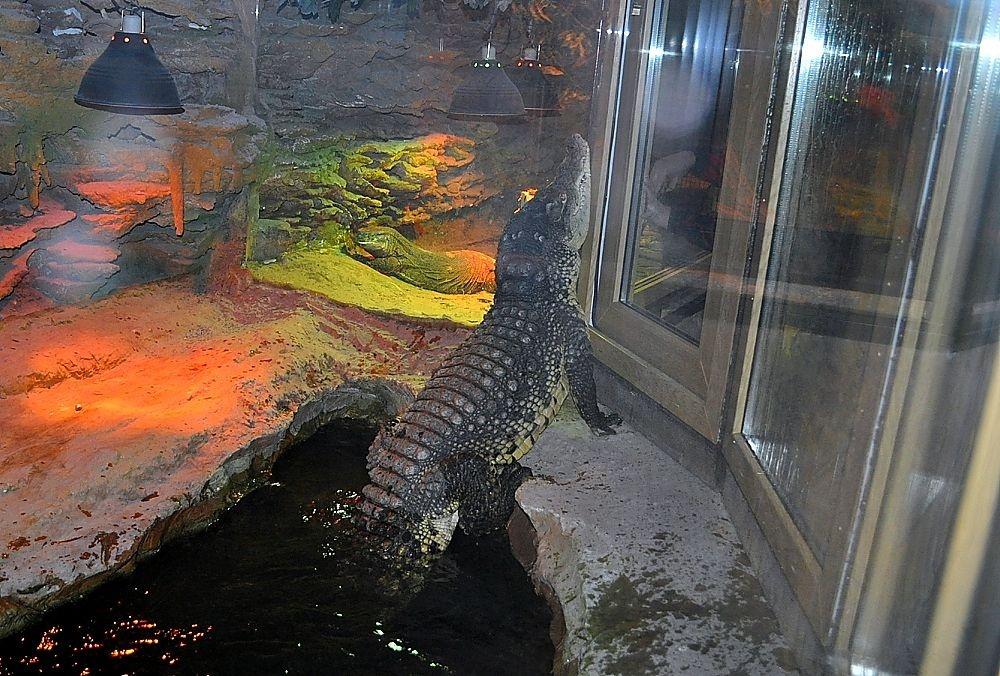 krokodil_00__
