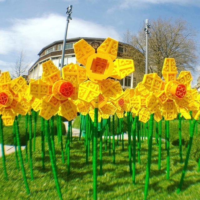 Вцентре английского города «расцвело» поле Lego-нарциссов