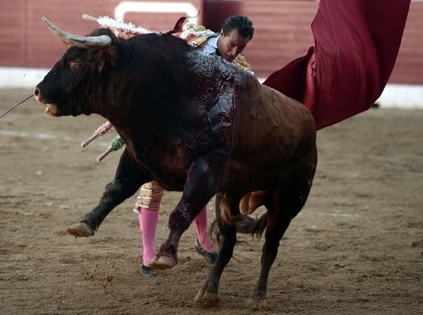 ВоФранции бык убил тореадора вовремя корриды