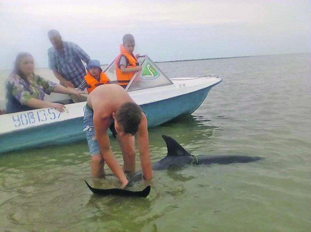 ВОдесской области туристы спасли 3-х дельфинов