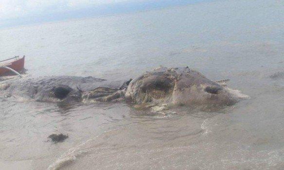 Наберегу Филиппин отыскали неизвестное животное