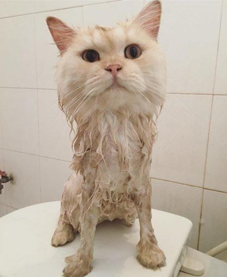 Кот стал меня любить