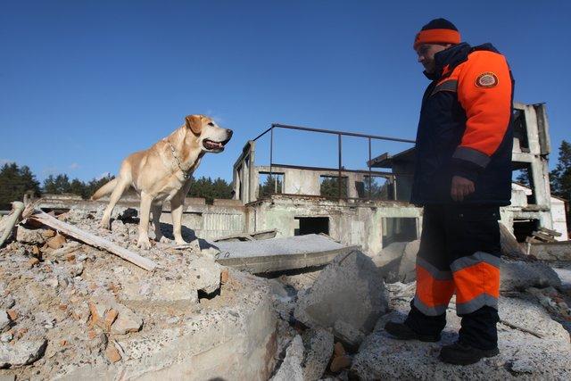 Че Гевара. Добродушная и очень талантливая собака работает и тренируется в «Мобильном спасательном центре ГСЧС Украины». Фото: В. Лазебник