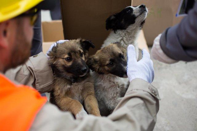 ИзЧернобыля вСША вывезут 200 бездомных щенков