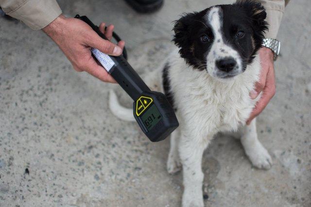 Две сотни бездомных щенков иззоны отчуждения ЧАЭС уедут вСША