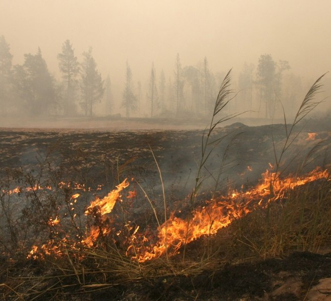Grass burns in the village of Beloomut caught in a deep smoke, some 130 kilometers from Moscow on July 31, 2010. Hundreds of thousands of firefighters, including army troops, battle forest fires raging across central Russia in the worst heatwave for decades, destroying houses and killing more than 30 people. A total of 238,000 firefighters are battling the flames in 14 regions, along with 226 aircraft, the emergency ministry said, calling the situation under control.  AFP PHOTO/ ANDREY SMIRNOV