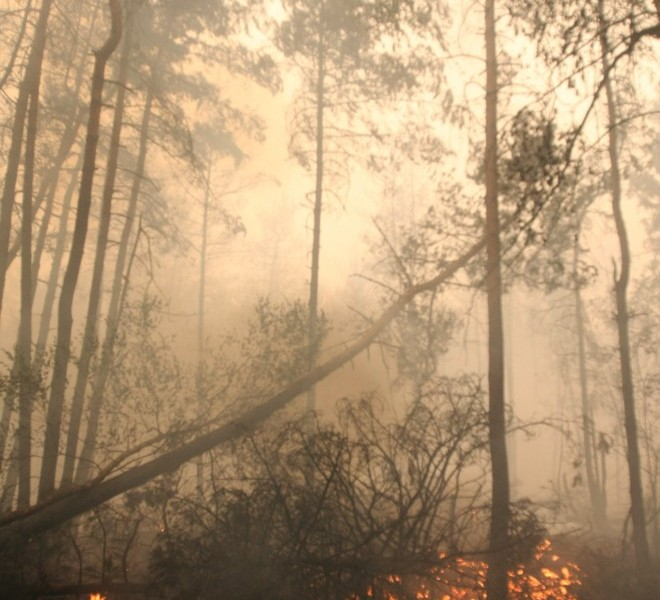 Grass burns in a woodland in the village of Beloomut caught in a deep smoke, some 130 kilometers from Moscow on July 31, 2010. Hundreds of thousands of firefighters, including army troops, battle forest fires raging across central Russia in the worst heatwave for decades, destroying houses and killing more than 30 people. A total of 238,000 firefighters are battling the flames in 14 regions, along with 226 aircraft, the emergency ministry said, calling the situation under control.  AFP PHOTO/ ANDREY SMIRNOV