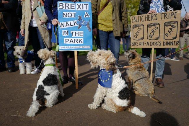 Собачий марш против Brexit состоялся встолице Англии