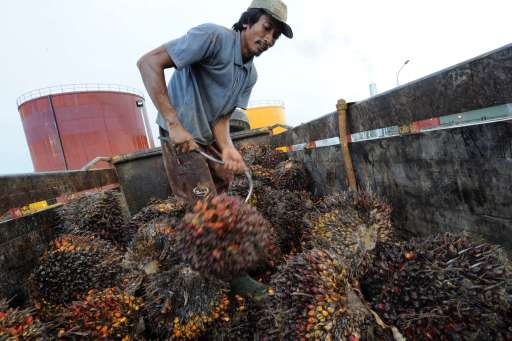 In this photograph taken during a media trip organized by Sinar Mas on August 2, 2010 a worker unloads a truckload of palm oil fruit at a mill in the vast concession of PT SMART, the palm oil unit of Sinar Mas, in Ketapang district in West Kalimantan province on Borneo island. SMART, Indonesia's biggest palm oil producer, said on August 10, it had been cleared of allegations made by environmental group Greenpeace that it had destroyed high conservation-value forests on Borneo. A report commissioned by SMART found that it was not to blame for widespread destruction of Borneo's forests as repeatedly alleged by Greenpeace, the company said. The investigation was carried out by Control Union Certifications and BSI Group.  AFP PHOTO / ROMEO GACAD