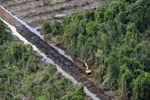 (FILES) This file aerial photograph taken during a media trip organized by Greenpeace on July 5, 2010 shows an excavator cutting through a peat land forest while constructing canals at the palm oil plantation of PT SMART, the palm oil unit of Sinar Mas, in Ketapang district in West Kalimantan province on Borneo island. Greenpeace accused Sinar Mas of destroying the peatland and charged that units of Indonesian paper and palm oil giant are logging in high conservation-value forests including habitats of endangered orangutans. SMART president Daud Dharsono said, as he released a commissioned report in Jakarta on August 10, the canal was constructed to maintain a proper water level to preserve the peatland. The investigation carried out by Control Union Certifications and BSI Group cleared SMART of charges for widespread destruction of Borneo's forests as repeatedly alleged by Greenpeace.  AFP PHOTO / ROMEO GACAD