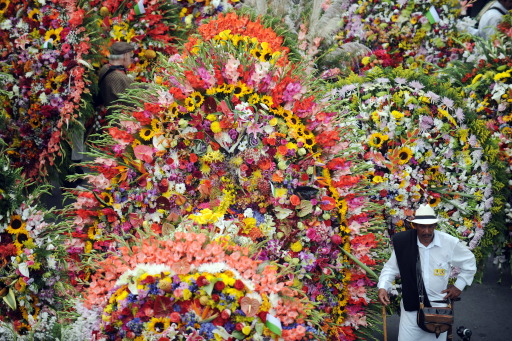"A farmer stands next to ""silletas"" flower arrangements on August 8, 2010, during the traditional ""Silleteros"" Parade of the Flower Fair in Medellin , Antioquia deparment, Colombia. Colombia is one of the major flower exporters in the world. AFP PHOTO/Raul ARBOLEDA"