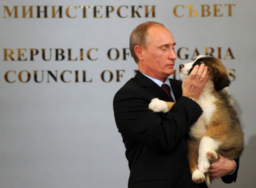 Russian Prime Minister Vladimir Putin hugs a Bulgarian shepherd dog, a present from his Bulgarian counterpart Boyko Borisov after their press conference in Sofia on November 13, 2010. Bulgaria's state energy holding BEH and Russian gas giant Gazprom set up on Saturday a joint venture to build and operate the Bulgarian stretch of the South Stream gas pipeline from Russia to southern Europe.AFP PHOTO / NIKOLAY DOYCHINOV