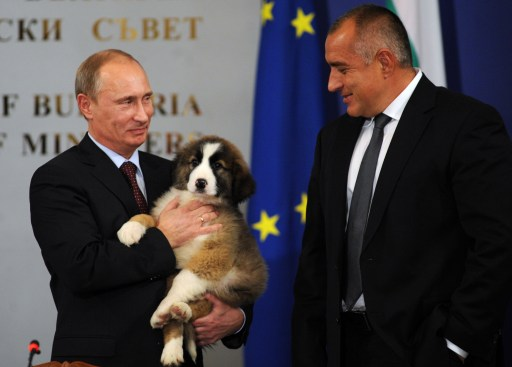 Russian Prime Minister Vladimir Putin holds on November 13, 2010 a Bulgarian shepherd dog he received from his Bulgarian counterpart Boyko Borisov (R) after their press conference in Sofia. Bulgaria's state energy holding BEH and Russian gas giant Gazprom set up on on November 13 a joint venture to build and operate the Bulgarian stretch of the South Stream gas pipeline from Russia to southern Europe. AFP PHOTO / NIKOLAY DOYCHINOV